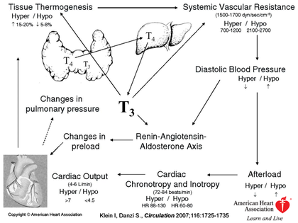 T3 & T4 - CV Hemodynamics - - Thyroid Dysfunction and Heart