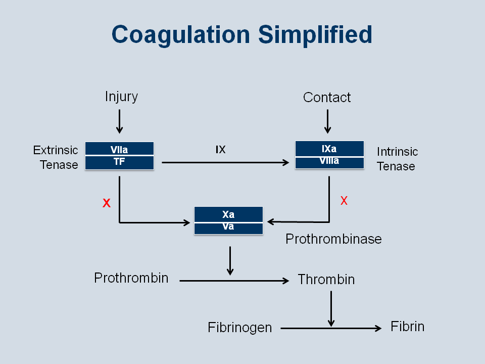 coagulation pathway and physiology In addition, the contact system-mediated intrinsic coagulation pathway may crosstalk with extrinsic coagulation pathway for example, the contact system of coagulation can be initiated either by the contact surface in plasma from women in late pregnancy or by micellar stearate added to plasma.