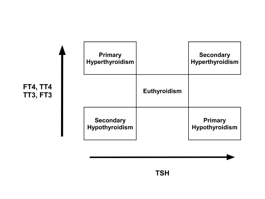 Laboratory Testing In Hyperthyroidism